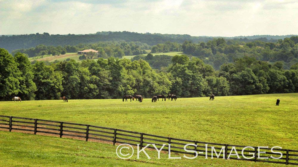 Danville, KY, Organic Blueberry Farm, home and land for sale, Estate, Kentucky, Realtor, best real estate agent in Kentucky, Certified Organic Farm